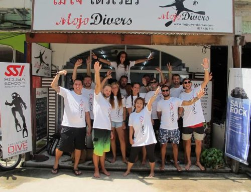 Why Choose Mojo Divers