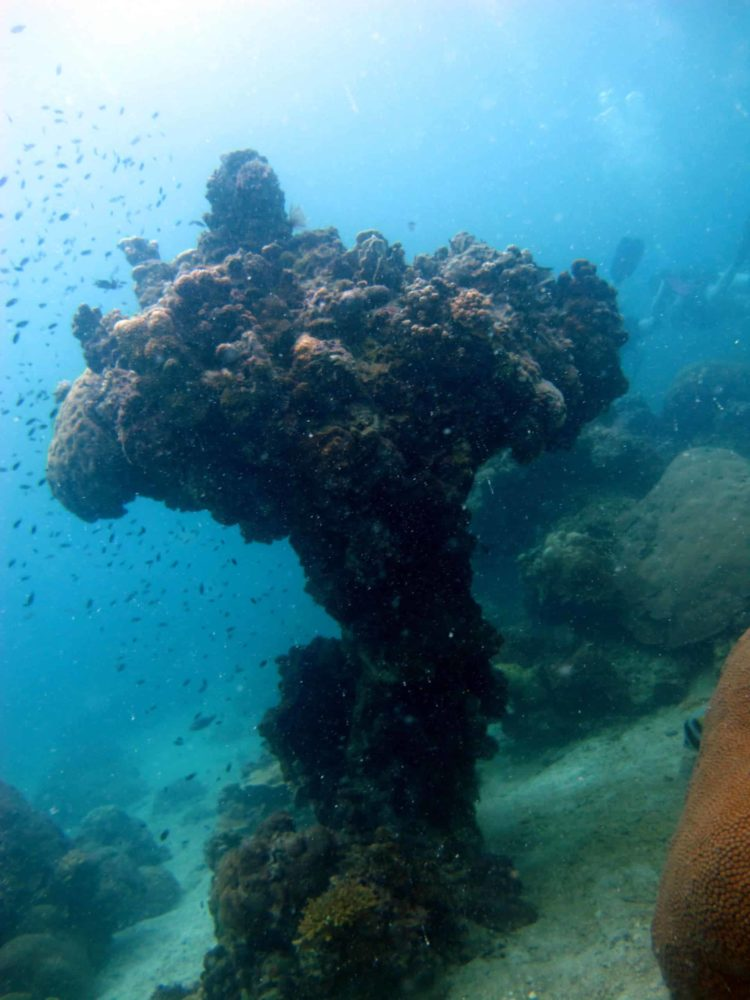 Amazing coral structure at Mango Bay
