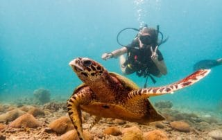 Tonao Hawksbill turtle and friend