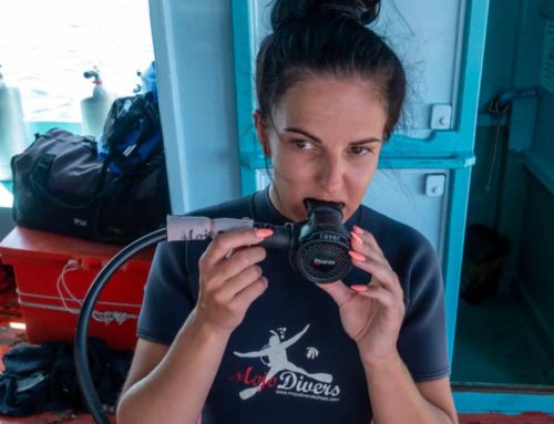 Scuba Diving in Koh Tao, Where to Go?