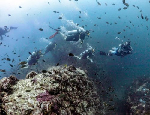 Science of Diving Specialty Online