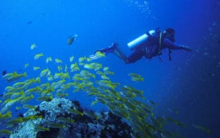 best diving in thailand