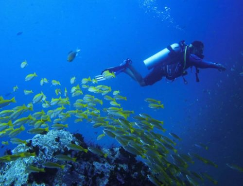 Where is the best diving in Thailand?