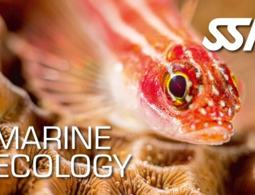 Marine Ecology Instructor Free Upgrade