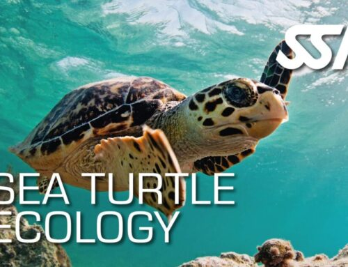 Sea Turtle Ecology Course Online